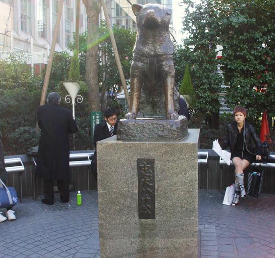 パークハビオ渋谷1012号室の画像
